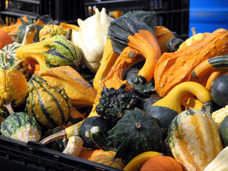 Canada Ontario Photos :: St. Jacobs :: St. Jacobs market - funny squashes