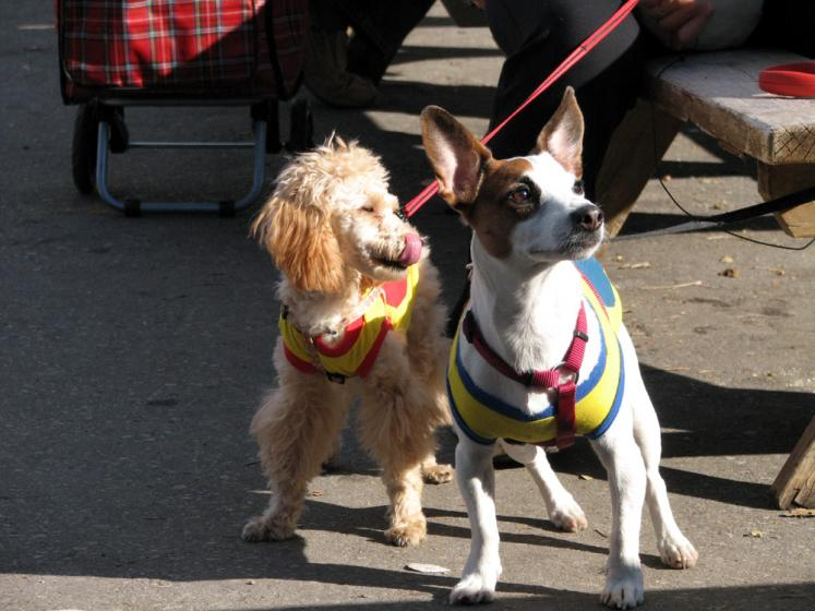 Canada Ontario Photos :: St. Jacobs :: St. Jacobs - super-super-dogs