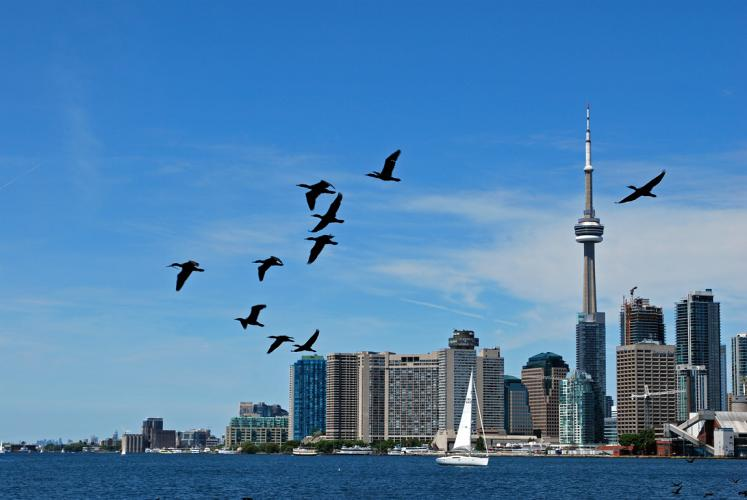 Canada Ontario Photos :: Toronto :: Toronto. Birds are flying across Ontario lake