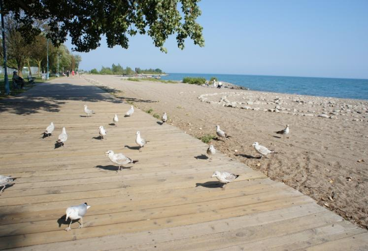 Canada Ontario Photos :: Toronto :: Seagulls on the Boardwalk Beaches Toronto