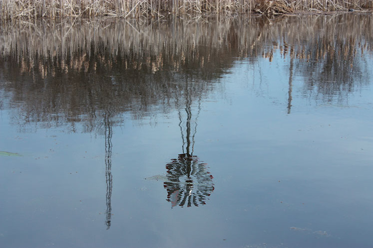 World Travel Photos :: Reflections :: Kortright Conservation Area - early spring