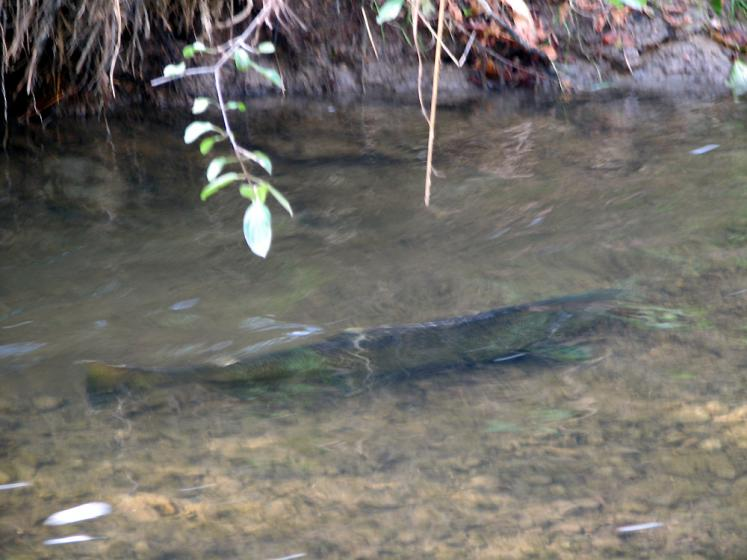 Canada Ontario Photos :: Vaughan - Kortright Conservation Area :: Kortright Conservation Area - fish