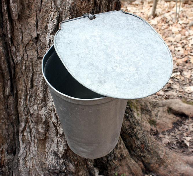Canada Ontario Photos :: Vaughan - Kortright Conservation Area :: Kortright Conservation Area - maple sap collection