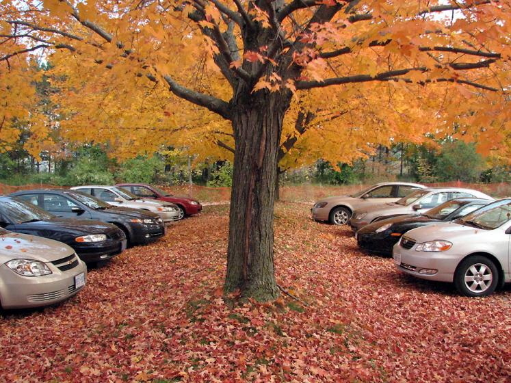 Canada Ontario Photos :: Vaughan - Kortright Conservation Area :: Kortright Conservation Area - parking