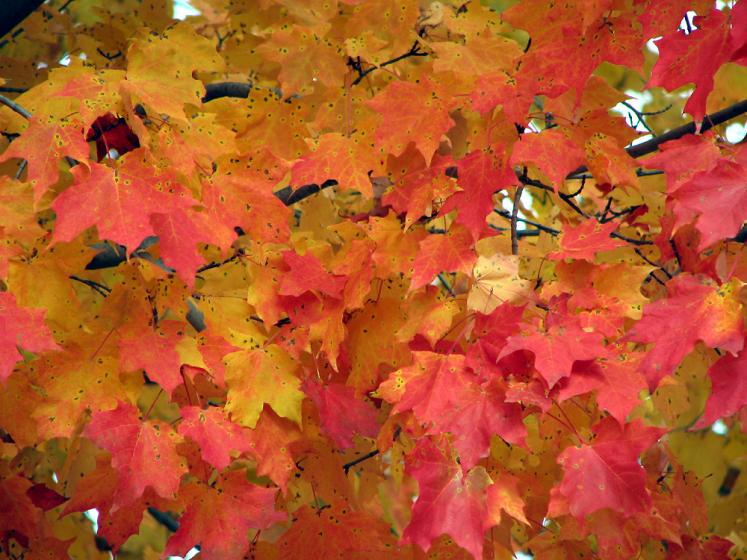 World Travel Photos :: Fall views :: Kortright Conservation Area - red and orange