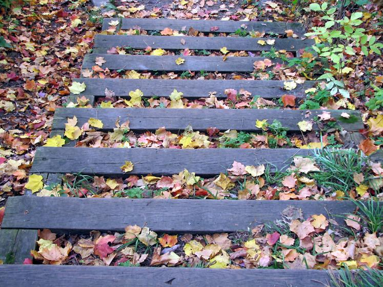 Canada Ontario Photos :: Vaughan - Kortright Conservation Area :: Kortright Conservation Area - stairs
