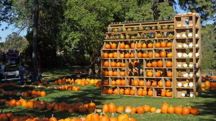 Canada Ontario Photos :: Misc :: Naumans Pumpkin St.Clements